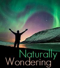 Blog_NaturallyWondering