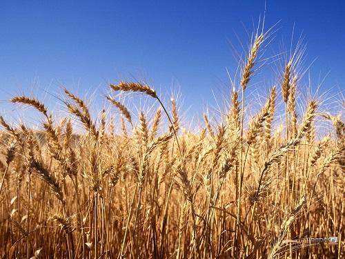 264536-harvest