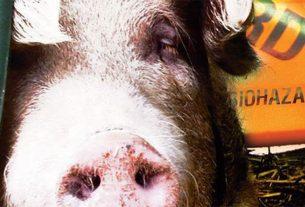 Babi dan Bahaya Lainnya