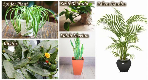 tanaman anti polutan